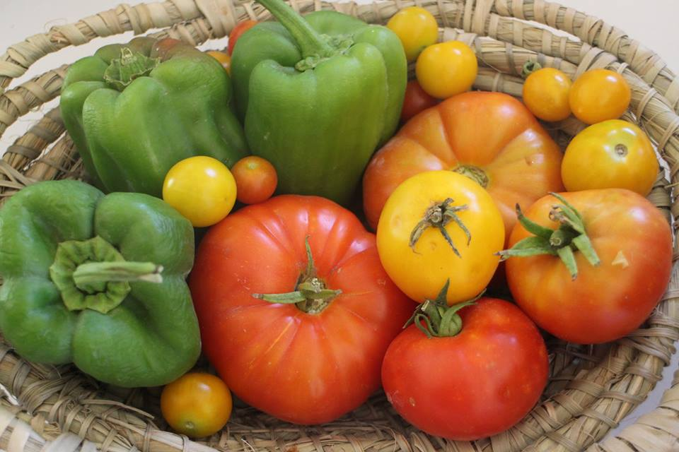 granja_tia_nora_verduras_verano
